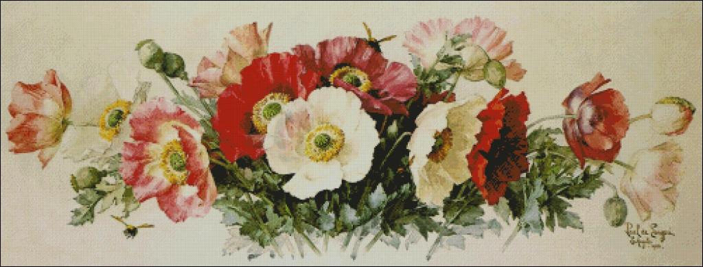 Icelandic Poppies - Raoul de  Longpre
